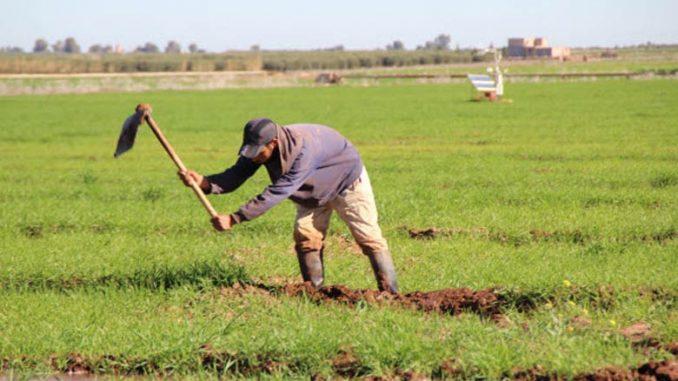 La résilience de l'agriculture paysanne face aux changements climatiques