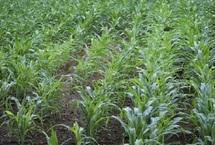 Bonne nouvelle pour l'agriculture printanière : Retour des pluies à partir du 13 avril