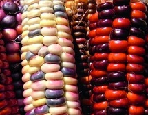 Les moisissures, un fléau pour les récoltes et la biodiversité