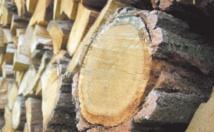 La production mondiale des produits dérivés du bois atteint sa plus forte hausse depuis 1947