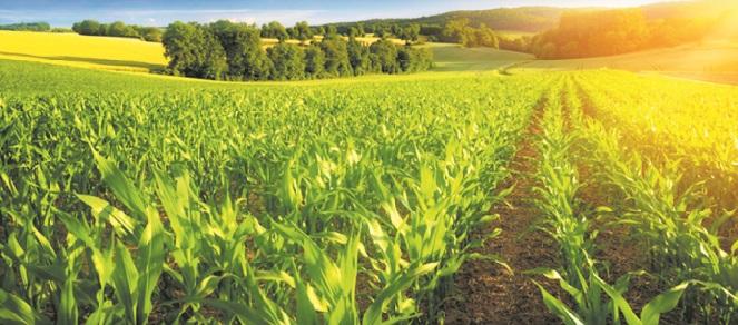 Spécial fin d'année : Le Plan Maroc Vert au chevet de l'agriculture