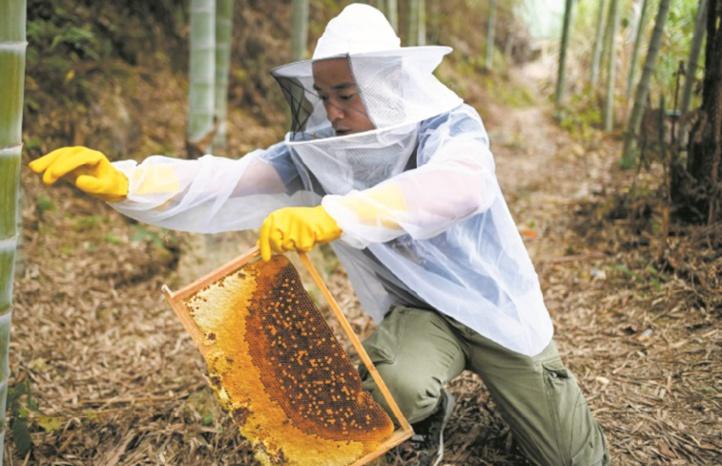 Avec la vidéo en ligne, des paysans chinois font leur miel
