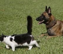 Au printemps, chiens et chats souffrent d'allergies comme les hommes