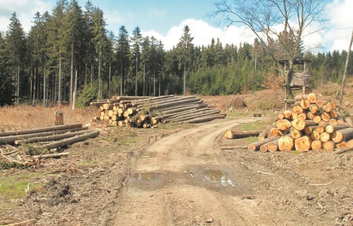 La forêt et le nouveau modèle de développement