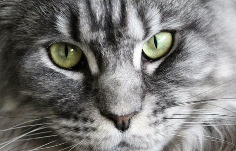 Insolite : Le chat fugueur