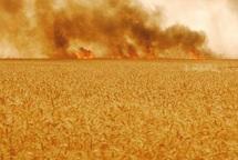 Le feu consume des champs à Safi et des forêts au Nord : Vague de chaleur et incendies font des ravages
