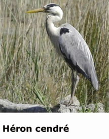 Lac Ksar Jdid à Errachidia, une richesse naturelle et écologique