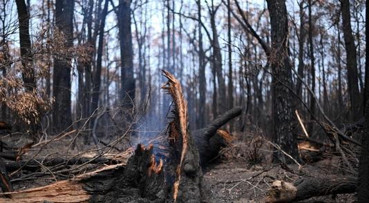 Les incendies enfin maîtrisés signent la fin d'un