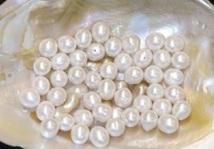 Découverte d'une perle fine vieille d'environ 7.500 ans
