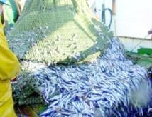 Laâyoune : Les industriels de la pêche se retirent de l'UNICOP et fondent leur propre association