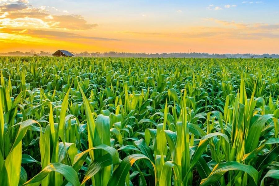 Les effets du COVID-19 sur l'alimentation et l'agriculture à l'échelle mondiale
