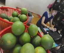 Au Vietnam, les entrepreneurs cherchent fortune en ligne