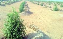 Laâyoune : Projets pour la protection de l'environnement