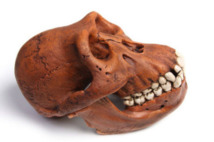 Karabo, l'exceptionnel australopithèque découvert en Afrique du sud