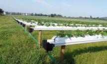 Selon l'ORMVAG Le Gharb enregistre une  production agricole satisfaisante
