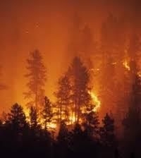 Forêt de Dar Chaoui : Arrestation de l'auteur présumé de l'incendie