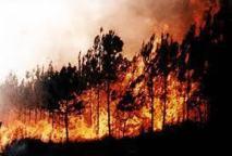 Feux de forêt : De la pyromanie dans l'air