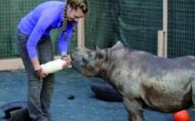 Ouverture du premier orphelinat sud-africain pour rhinocéros