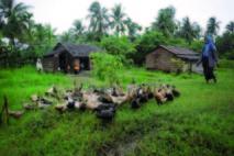 Le microcrédit, un espoir de réduire la pauvreté dans les campagnes birmanes