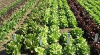 La production agricole se poursuit et couvre largement les besoins de consommation