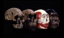 Homo erectus a cohabité avec d'autres espèces humaines en Afrique