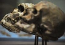 L'histoire alimentaire des hominidés inscrite dans leurs dents