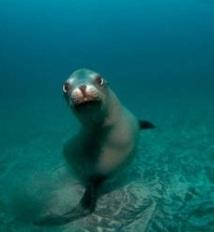Les UVB tuent de plus en plus d'espèces marines