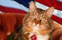 Insolite : Le chat sénateur