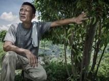 Sauver l'arbre à encens de Hong Kong