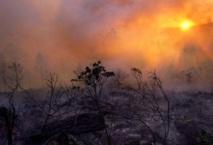 Al Hoceima : Feu de forêt maîtrisé