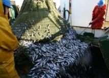 Progression des débarquements et augmentation des prix : L'Office national des pêches noie le poisson