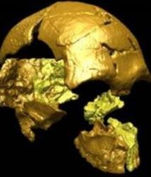 Le plus ancien homme moderne asiatique découvert