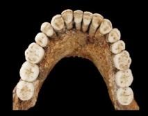 Les hommes de Néandertal étaient surtout droitiers