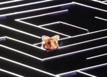 Des chercheurs ont réussi à manipuler les rêves de rats