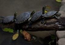 Insolite : Les dessous chic des trafiquants d'animaux exotiques