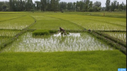 L'optimisation du potentiel agricole de l'Afrique passe par la modernisation et la transformation
