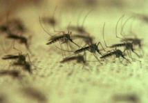 Virus du Nil occidental : Infections et décès encore en hausse aux Etats-Unis