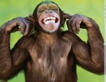Des singes retrouvent leur capacité à décider grâce à un implant neuronal