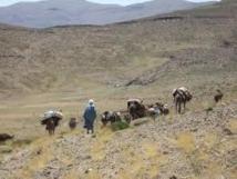 Tiwizi, l'entraide sociale d'antan ou une tradition de solidarité qui se perd