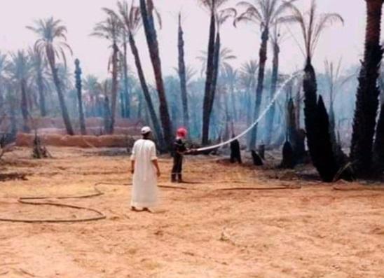 Feu ravageur : Les oasis à la merci des flammes