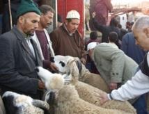 Aid Al Adha : 4,5 millions d'ovins mâles pour une demande estimée à 4,3 millions