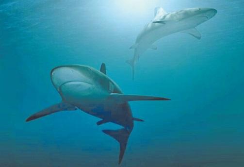 Le WWF appelle les pays méditerranéens à lutter  effectivement contre la pêche illégale des requins et des raies