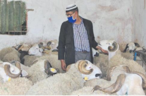 Plus de 7,2 millions d'ovins et de caprins identifiés pour l'immolation rituelle de l'Aïd Al Adha