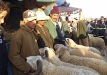 Le prix du mouton demeure inaccessible :  Flambée des prix à Khouribga