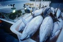 Thon rouge de Méditerranée : Le Maroc mis à l'index par la WWF