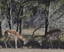 Malgré les critiques, l'Afrique du Sud veut miser sur la chasse