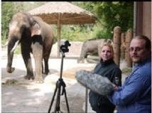 Koshik, l'éléphant d'Asie qui parle coréen