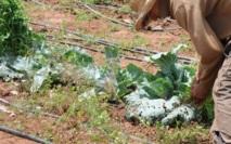 Forte dégradation orageuse sur les côtes : Le changement de climat agace les agriculteurs