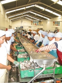 Dakhla : La mafia du poulpe sévit encore