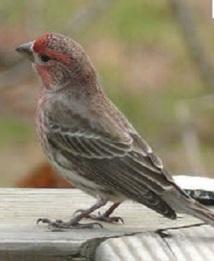 Pour ne pas tomber malades, les oiseaux évitent leurs congénères suspects